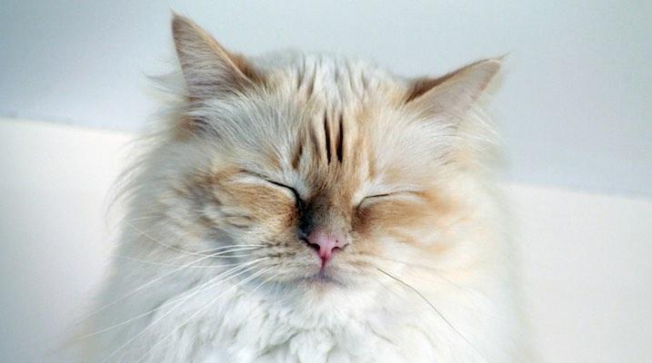 Cat Fur Personality Test Can Fur Color Affect Your Cat S Behavior